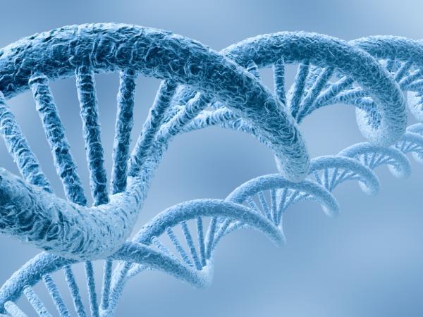 Гены молодости