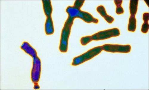 Обнаружен новый регуляторный ген аутизма