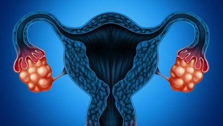Ученые: яичники можно будет омолаживать и продлевать фертильность
