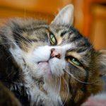Особенности болезней глаз кошек