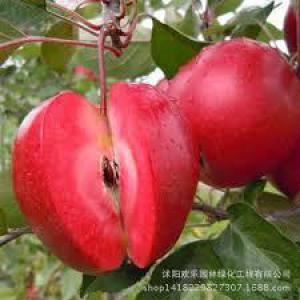 Назван доступный фрукт, который оказался сексуальным стимулятором