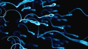 Математики разгадали тайну движения сперматозоидов