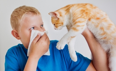 Аллергия на домашних питомцев