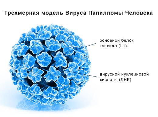 Вирус папилломы человека. Как выявить и как лечить?