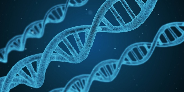 Гены рака яичников женщины наследуют от отцов