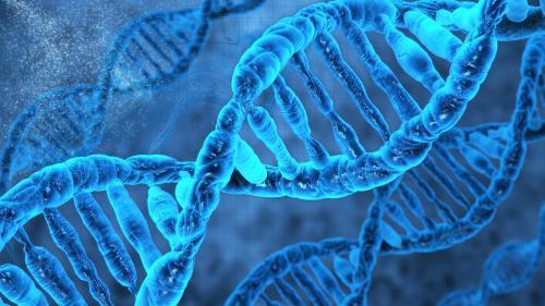 Ученые: частый секс меняет структуру ДНК