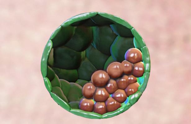 Искусственные эмбрионы, вызывающие беременность