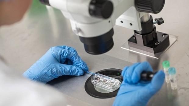 Женщины, использующие донорские яйцеклетки во время ЭКО, смогут рожать детей, похожих на себя