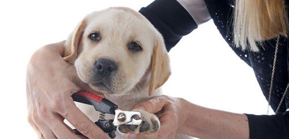 Нужно ли собакам стричь когти?