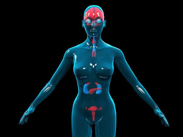 Как оценить состояние гормональной системы?