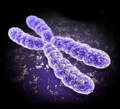 Синдром Клайнфельтра — лишняя женская хромосома