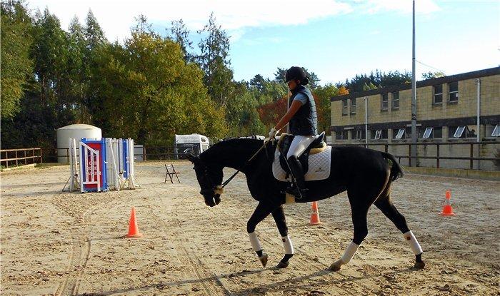Как составить план тренировок для лошади?