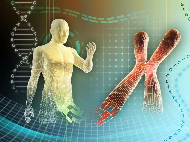 Отцовские Х-хромосомы отвечают за аутоиммунные болезни у женщин