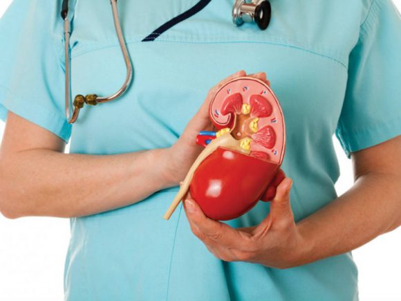 6 простых правил для сохранения здоровья почек