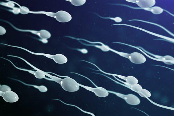 Исследуем сперму для оценки ее плодородности
