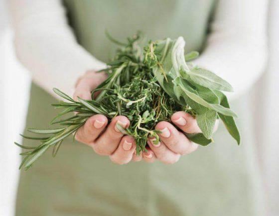 Травы для поддержания баланса женских гормонов