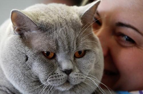 Кошка поможет при гинекологических проблемах