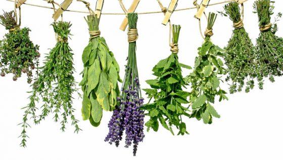 Травы помогут восстановить баланс гормонов при эндометриозе